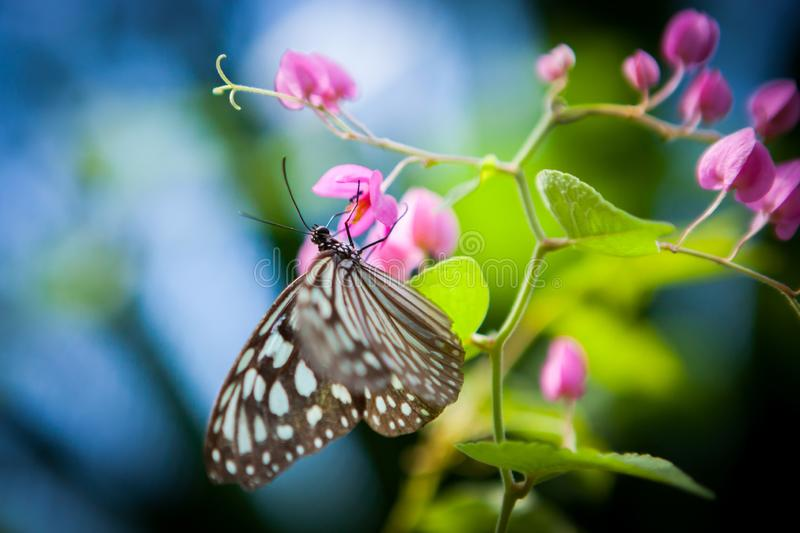 butterfly in the garden royalty free stock photography