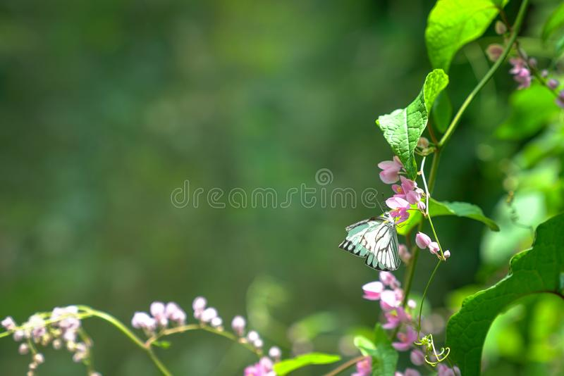 Butterfly garden, spring concept. Butterfly garden, with butterflies, pink flowers and lush green leaves and plants, nature background, with copy space stock photo