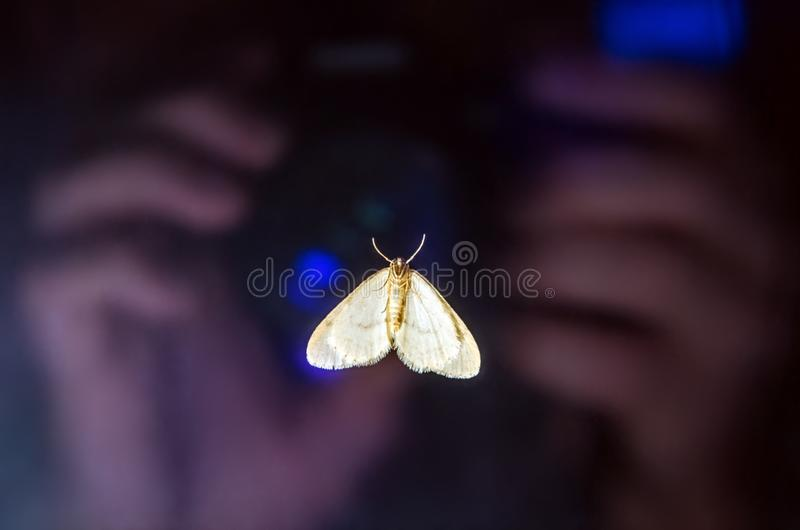 18.11 001. A butterfly on the glass of the window, which reflects the hands of the photographer and the camera lens. Close up. stock image