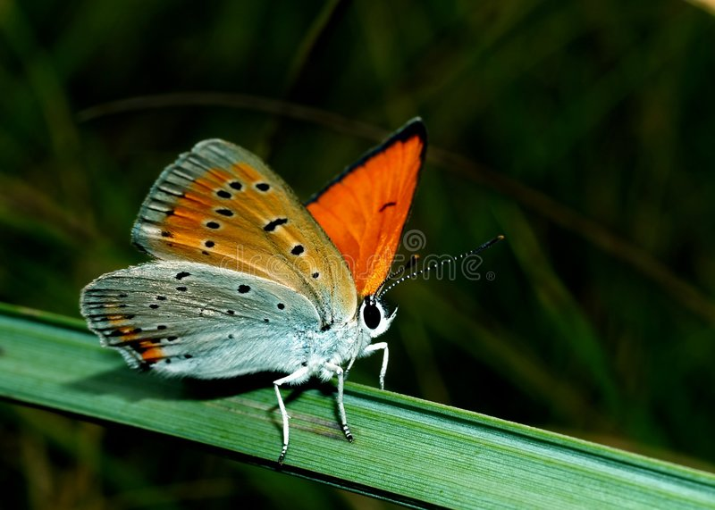 Butterfly On The Grass Stock Photos