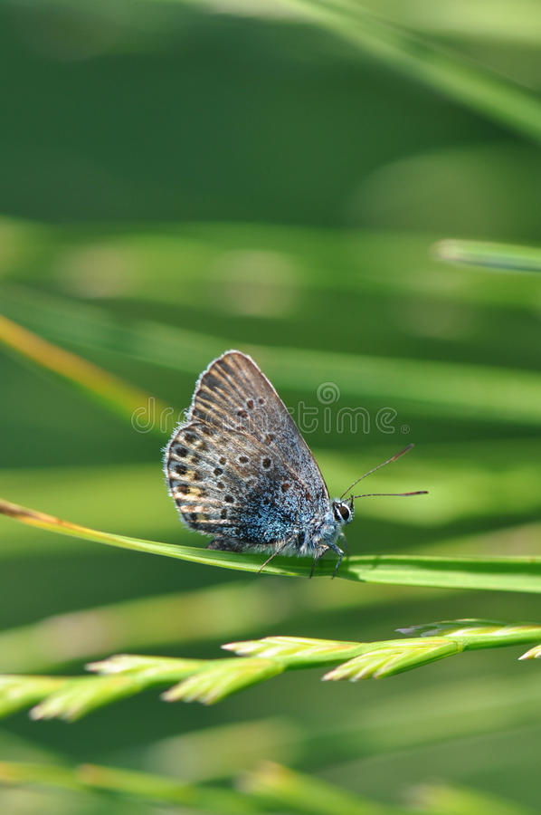 Butterfly on grass royalty free stock photography