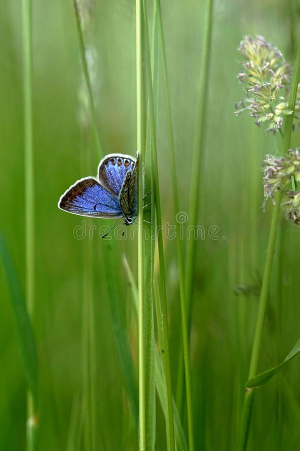 Butterfly in the grass royalty free stock images