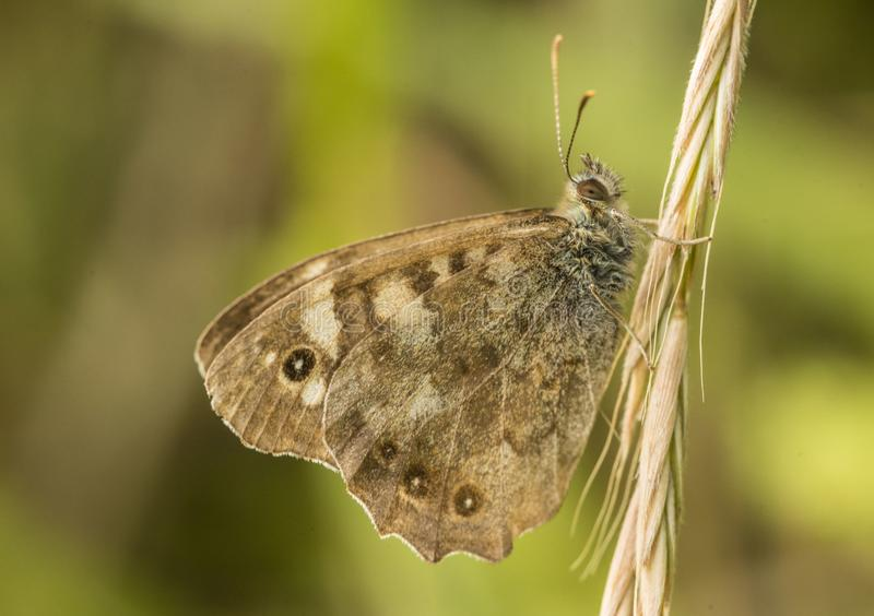 Butterfly on grass in the summer royalty free stock photos