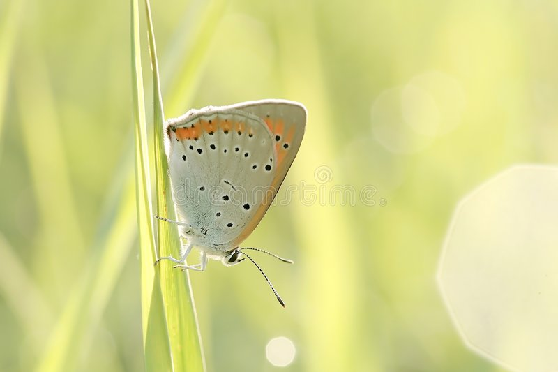 Download Butterfly On A Grass In The Sun Rays Stock Image - Image: 9136971