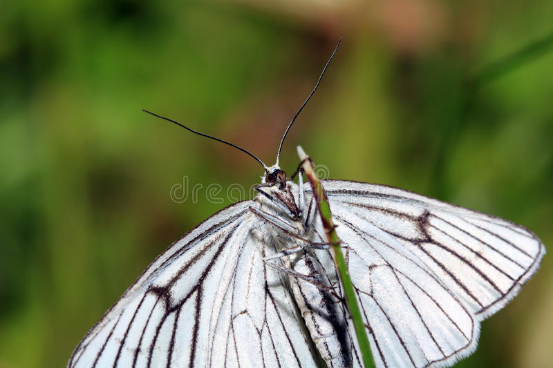 Download Butterfly On Green Background Royalty Free Stock Image - Image: 25564116