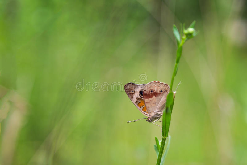 Butterfly on the green branch with green background. A butterfly sits on the green branch with green background in the forest royalty free stock image