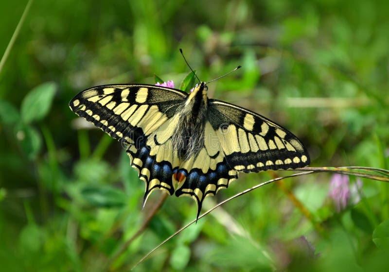 Butterfly In Green Garden Free Public Domain Cc0 Image