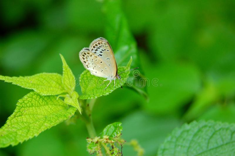 Download Butterfly On A Green Leaf Royalty Free Stock Photo - Image: 13086955