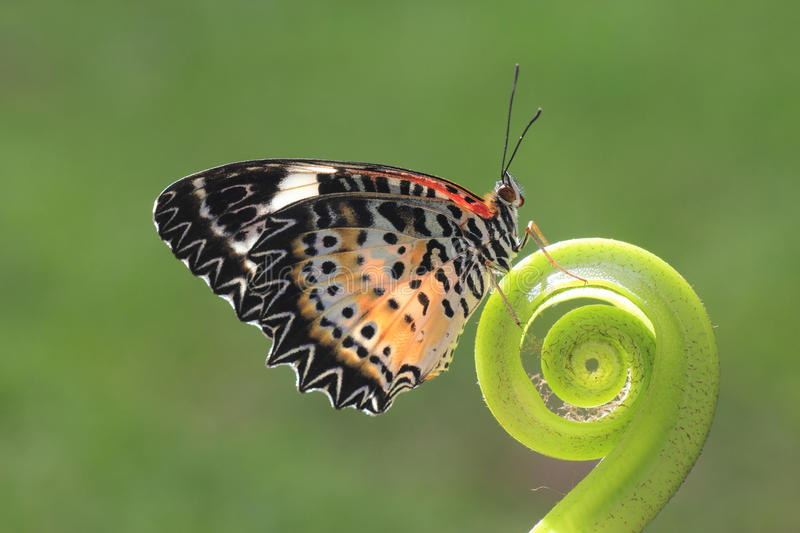 A butterfly on the green leaf. Macro shot with green background stock photography