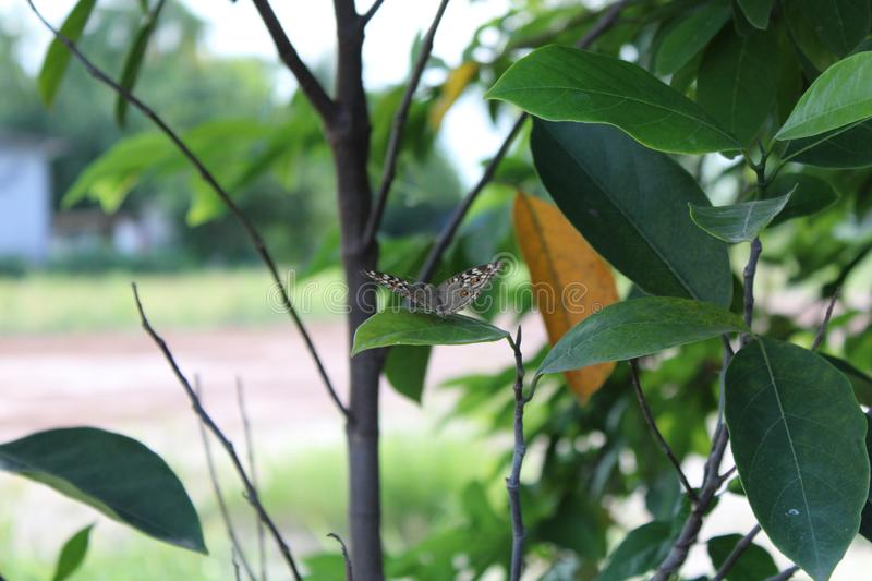 Butterfly on green leaf in the nature. stock photo