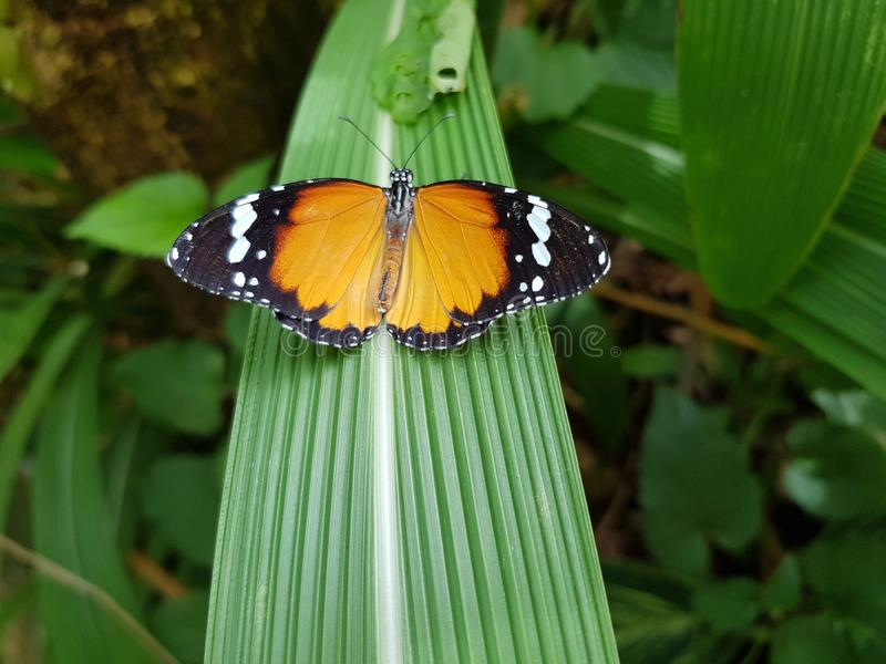 Butterfly on a green leaf stock image