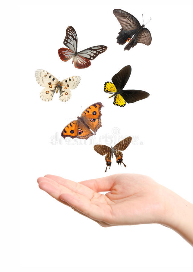 Butterfly on hand stock image