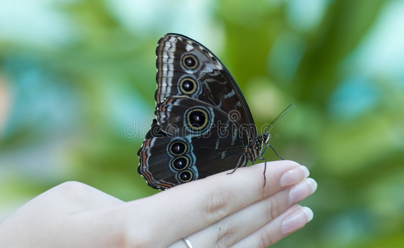 Butterfly on hand royalty free stock images