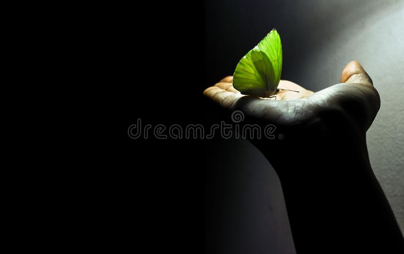 Butterfly in hand with black background- Eco sustainable concept stock images