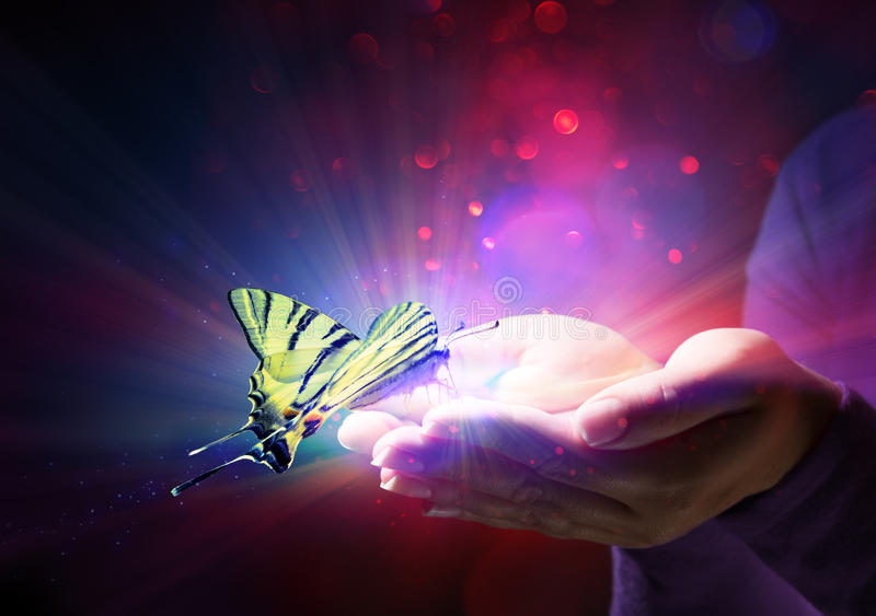 Butterfly in hands vector illustration