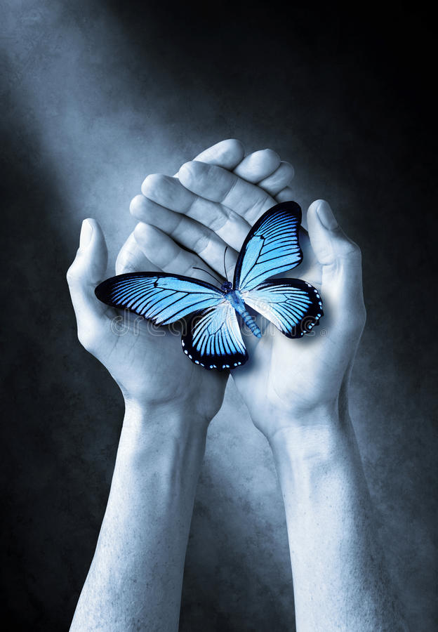 Butterfly Hands Life Love Spirituality. Hands holding a blue butterfly royalty free stock photography