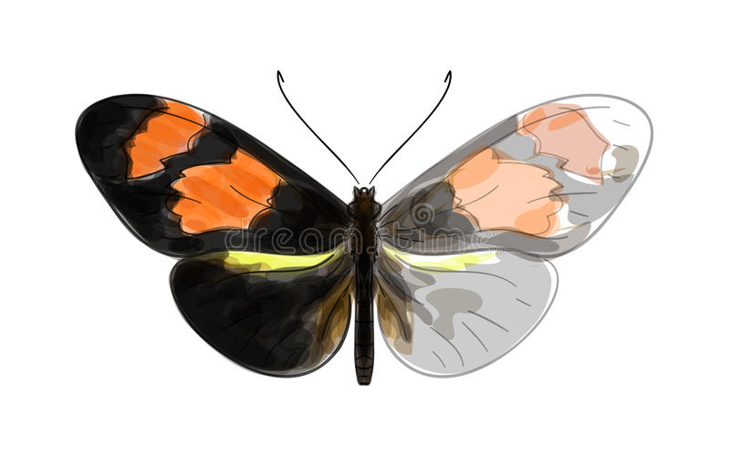 Download Butterfly Heliconius. stock illustration. Image of iridescent - 25619213