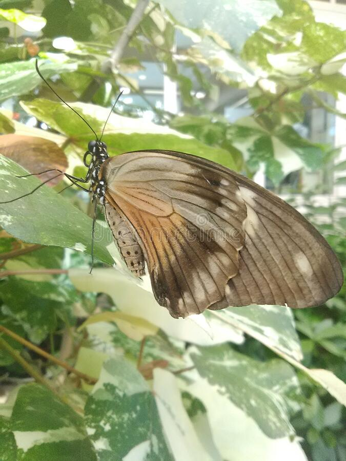 Butterfly in Hershey Gardens exotic atrium royalty free stock photography