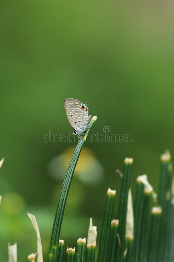 Butterfly in Hong Kong royalty free stock photography