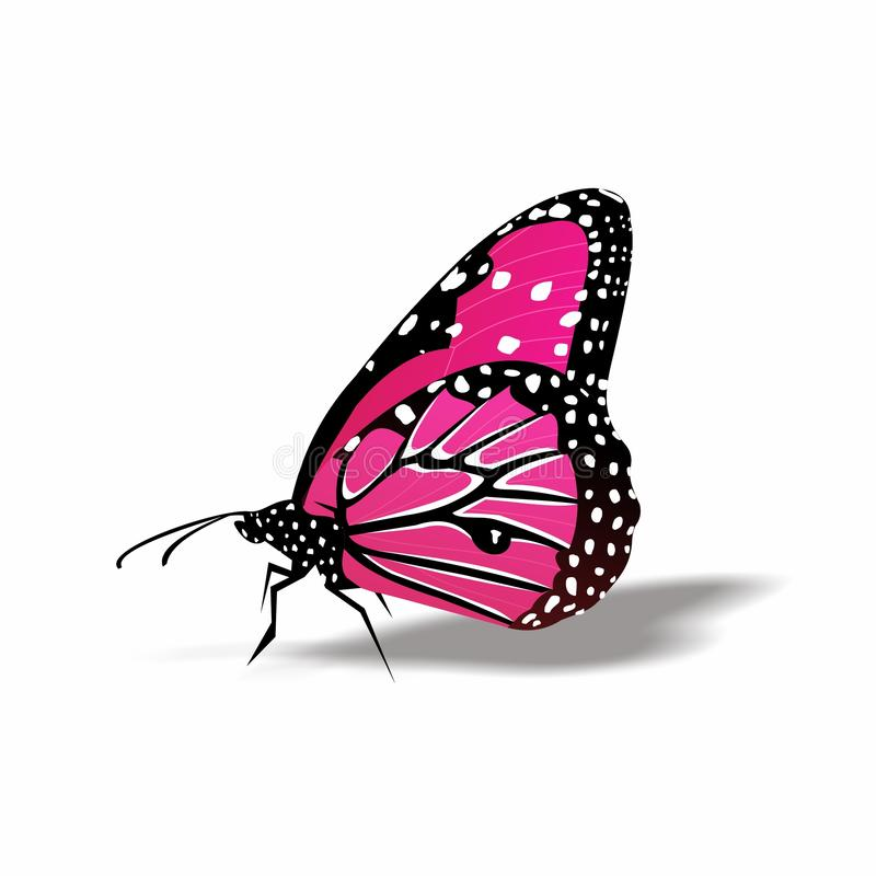Butterfly icon, Cute Cartoon Funny Character with Colorful Wings, Flying Insect in White Background. This is `Butterfly icon, Cute Cartoon Funny Character with stock illustration