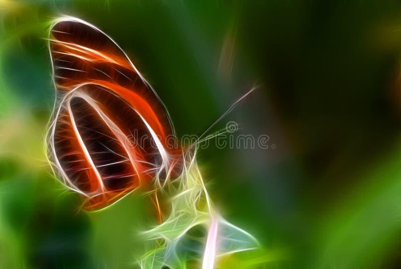butterfly illustration vector illustration