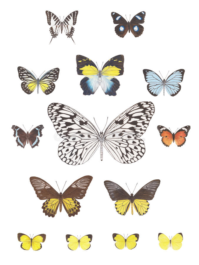Butterfly image stock image