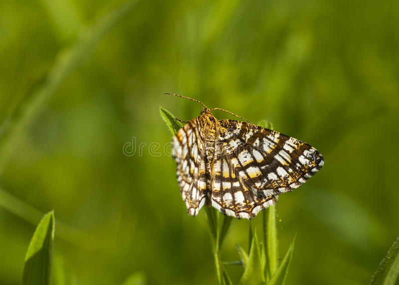Download Butterfly stock photo. Image of closeup, grass, butterfly - 31761224