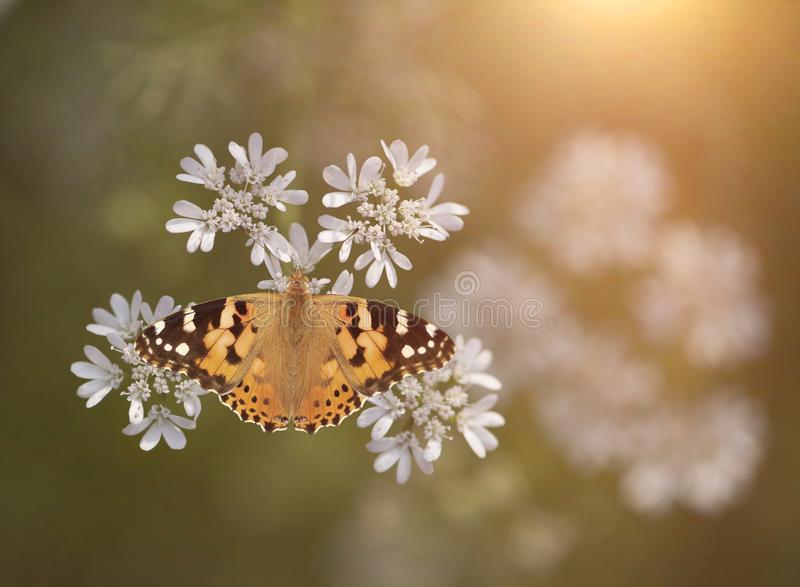 Butterfly image from Above at sunrise stock photo