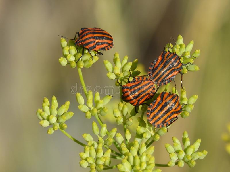 Butterfly, Insect, Moths And Butterflies, Brush Footed Butterfly royalty free stock images
