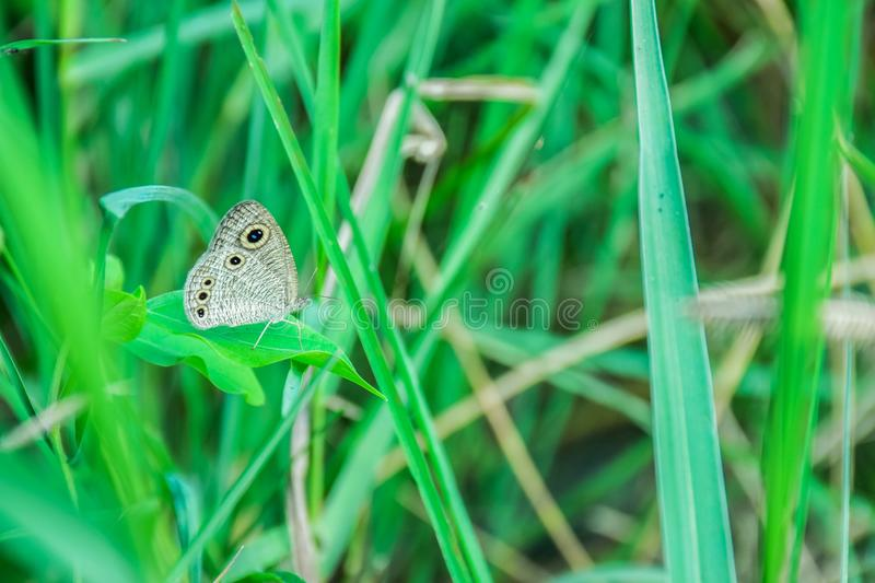 Butterfly, Insect, Moths And Butterflies, Grass stock image