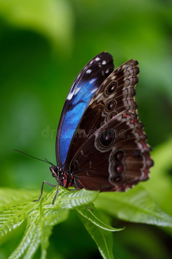 Butterfly, Insect, Moths And Butterflies, Lycaenid stock photos