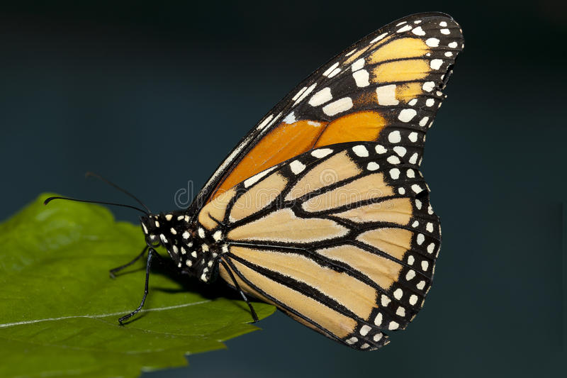 Butterfly interaction. royalty free stock photos