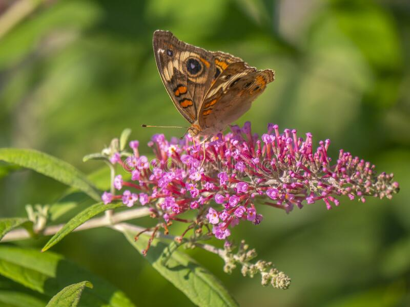 Butterfly fotografie stock libere da diritti