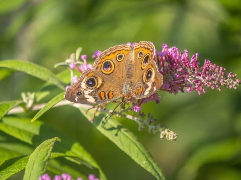 Butterfly immagini stock libere da diritti