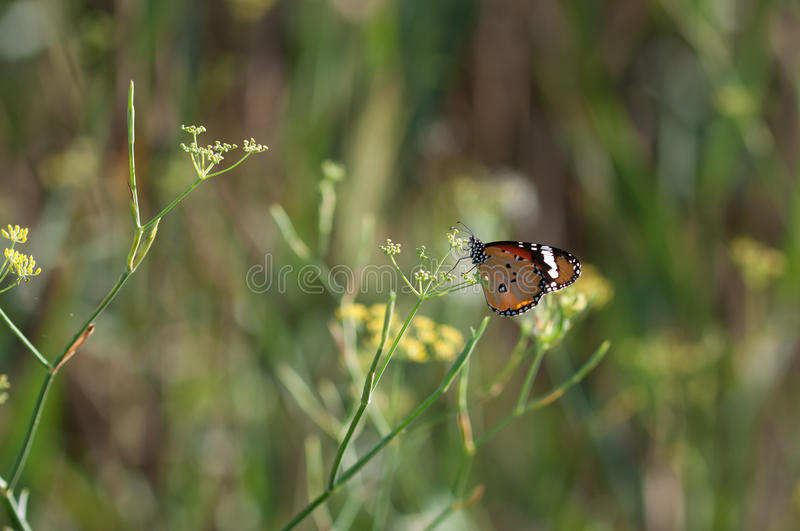 Butterfly in landlord Green. Butterfly in landlord Green royalty free stock photo