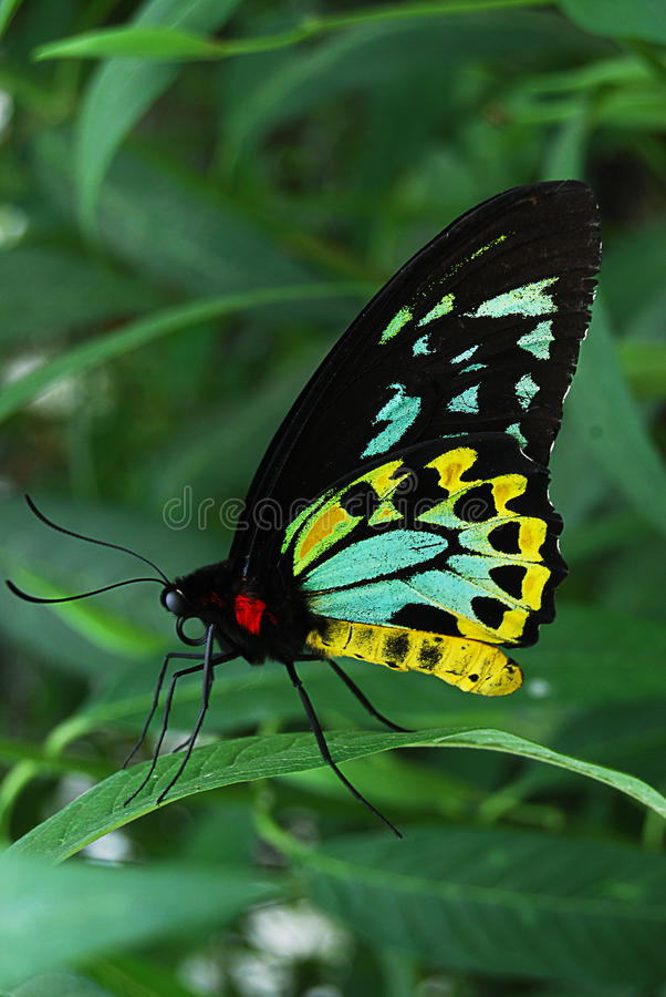 Butterfly on a leaf royalty free stock photos