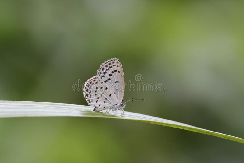 Butterfly on a leaf in Hong Kong royalty free stock images