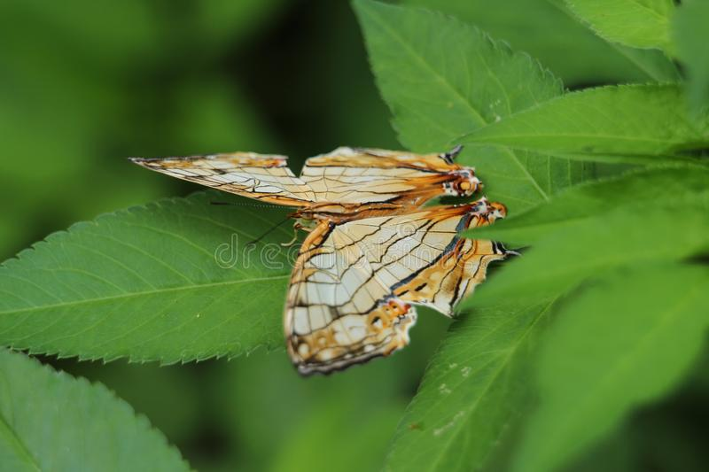 Butterfly on a leaf stock photo