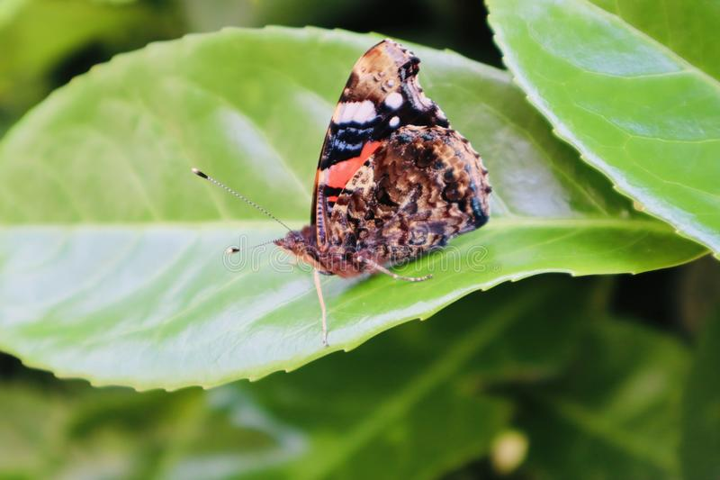 Butterfly on a leaf. stock photos