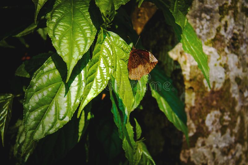 Butterfly on leaves stock images
