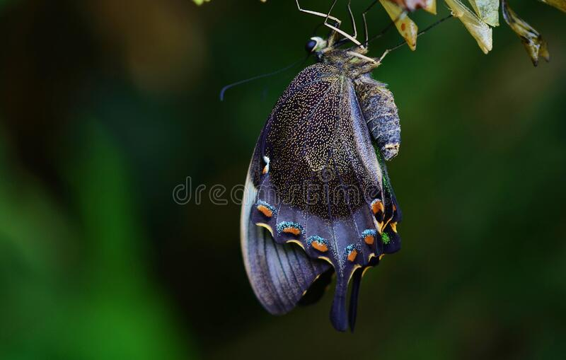 Butterfly on leaves royalty free stock photography