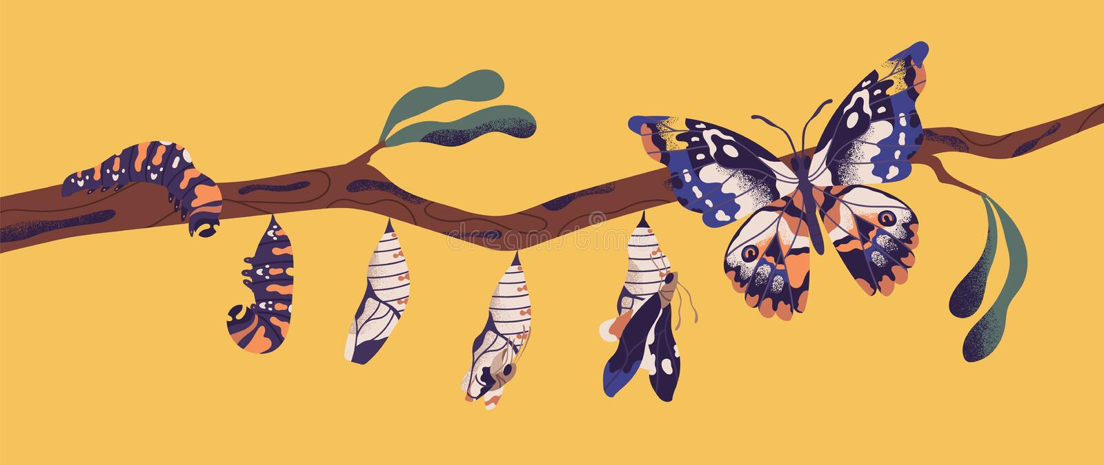Butterfly life cycle - caterpillar, larva, pupa, imago eclosion. Stages of metamorphosis, growth and transformation. Process of winged insect on tree branch stock illustration