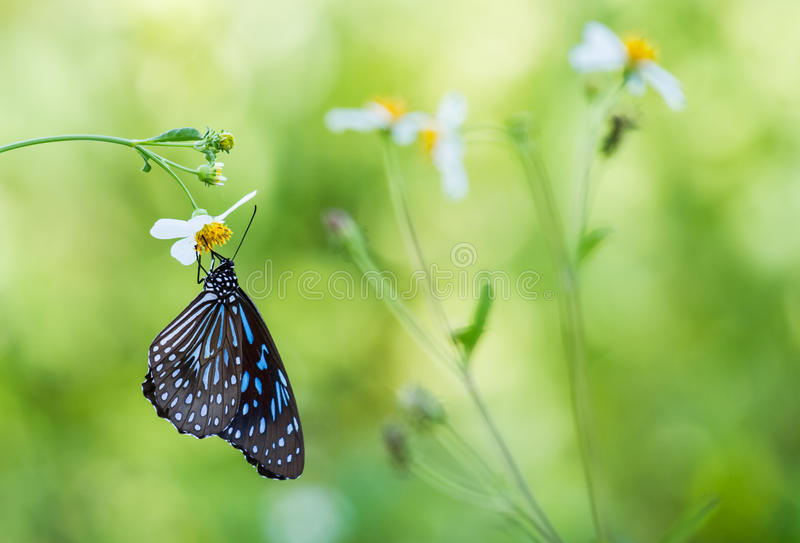 Butterfly life stock photo