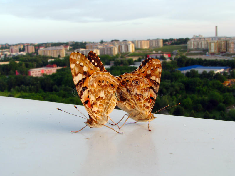 Butterfly lovers. Overlooking the city stock photos