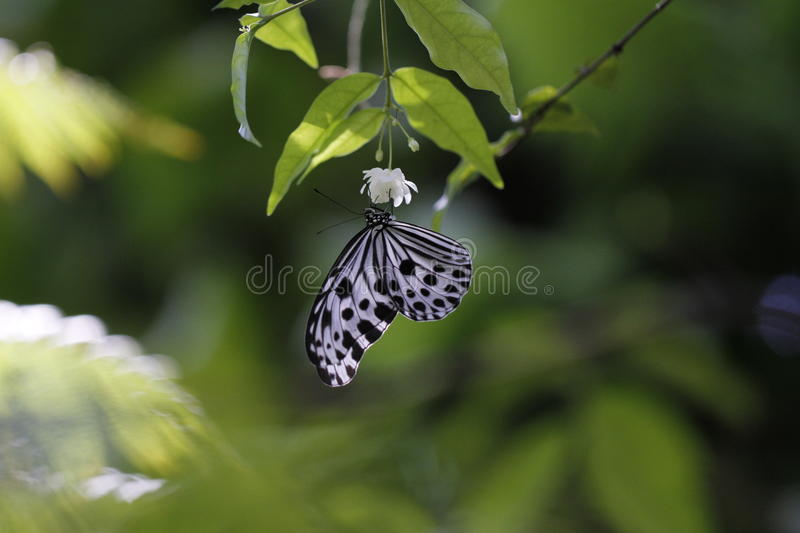 Download Butterfly macro stock photo. Image of nature, flower - 21760978