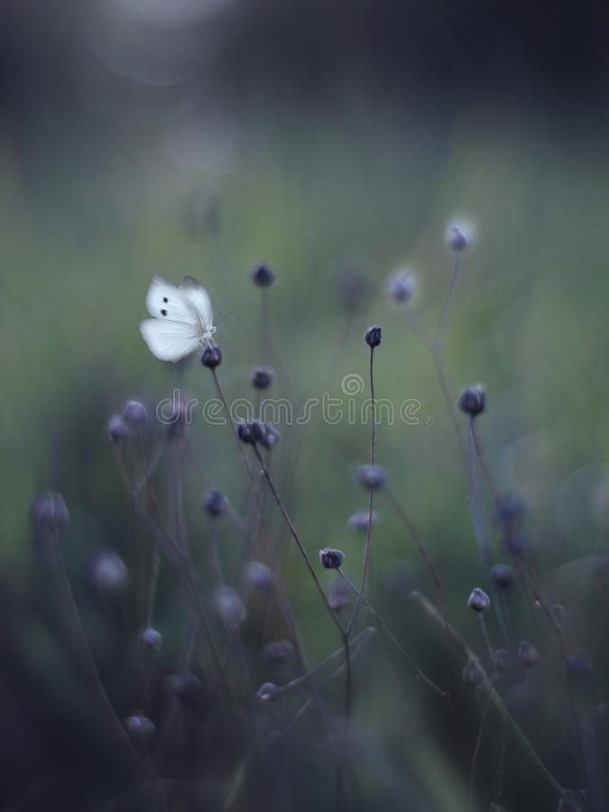 Butterfly. In the meadow stock photography