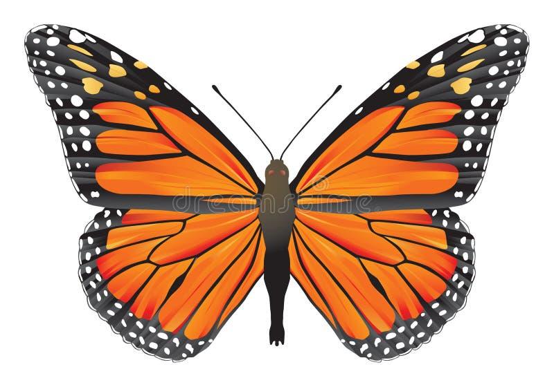 Butterfly monarch stock illustration
