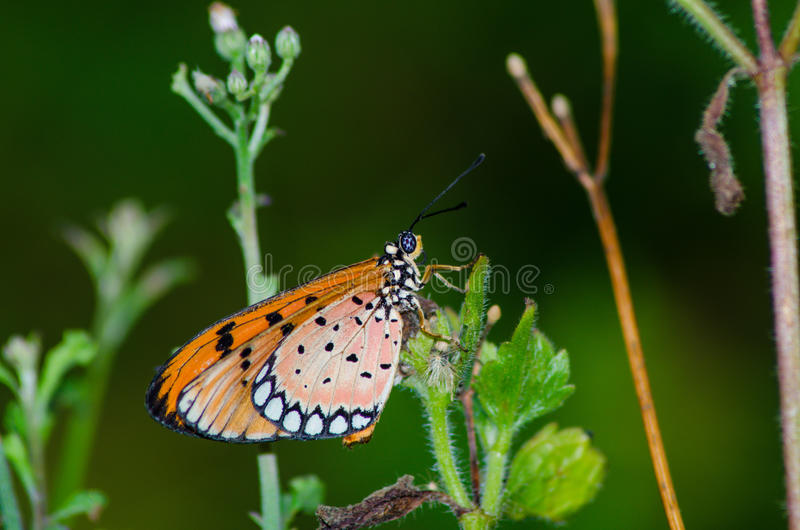 Download Butterfly stock photo. Image of insect, plant, animals - 39508812