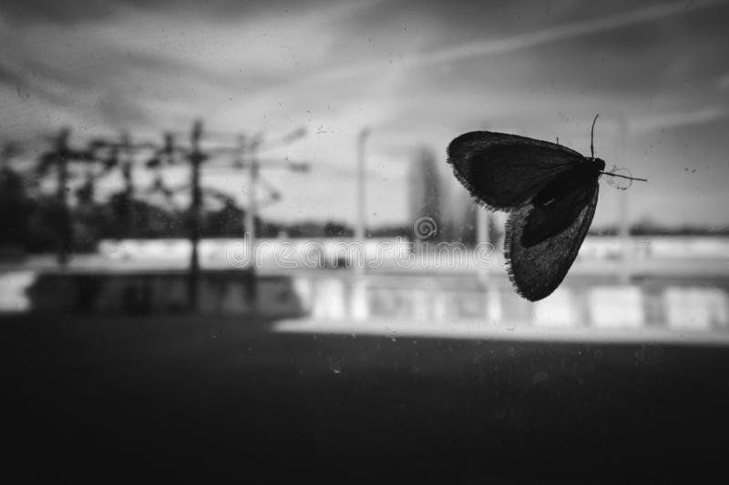 Butterfly or moth in Dachau Germany concentration camp stock photos