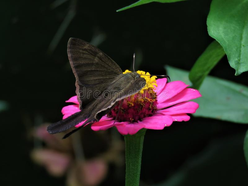 Butterfly, Moths And Butterflies, Flower, Insect stock images